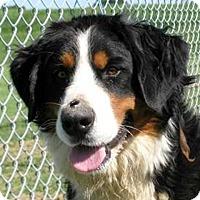 Adopt A Pet :: Bernadette