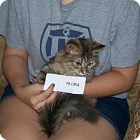 Adopt A Pet :: Alona - San Tan Valley, AZ