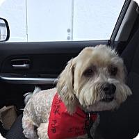 Adopt A Pet :: Fozzie - Loxahatchee, FL