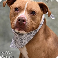 Adopt A Pet :: Eddie - Newnan City, GA