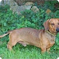 Adopt A Pet :: Rascal - San Jose, CA