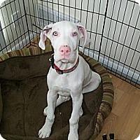 Adopt A Pet :: Twinkle - West Bloomfield, MI
