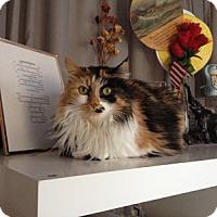 Adopt A Pet :: Paisley - Alexandria, VA