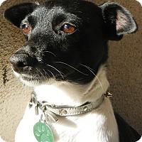 Adopt A Pet :: Olivia - Orange, CA