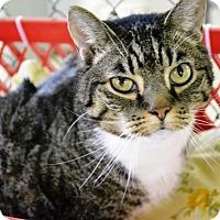 Adopt A Pet :: Jay - East Smithfield, PA