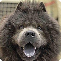 Adopt A Pet :: BERT/ERNIE - Dix Hills, NY