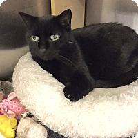 Adopt A Pet :: Blackberry - Colmar, PA