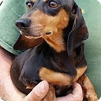 Adopt A Pet :: Christeeny Applegate - Gainesville, FL