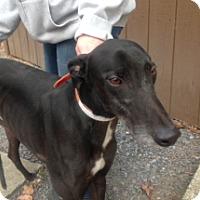 Adopt A Pet :: Patrick Chung - Gerrardstown, WV