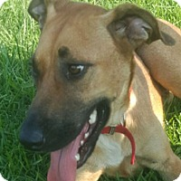 Adopt A Pet :: Adella AD 03-18-17 - Preston, CT