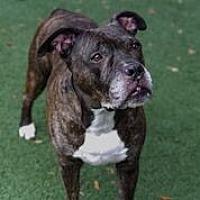 Adopt A Pet :: Troy - Plant City, FL