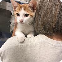 Adopt A Pet :: Malcom - Tracy, CA