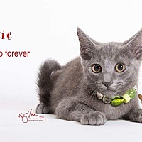 Adopt A Pet :: Minie - Sherman Oaks, CA