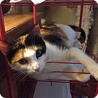Adopt A Pet :: Caramel - Marietta, GA