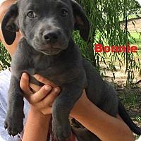 Adopt A Pet :: Bonnie - Clear Lake, IA