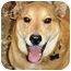 Photo 3 - Jindo/German Shepherd Dog Mix Dog for adoption in Pasadena, California - Ray