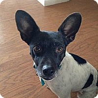 Adopt A Pet :: Dallas - Burbank, CA
