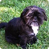 Adopt A Pet :: CASH - Salt Lake City, UT