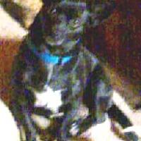 Adopt A Pet :: Carley - Seward, AK