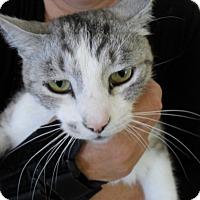 Adopt A Pet :: Louie - Laguna Woods, CA