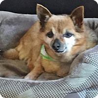 Adopt A Pet :: Rusty - Costa Mesa, CA
