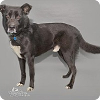 Adopt A Pet :: Trigger - Waynesboro, PA
