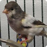Adopt A Pet :: Arriba - Elizabeth, CO