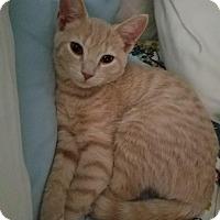 Adopt A Pet :: Ohna - Tarboro, NC