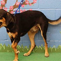 Adopt A Pet :: TRES - Waco, TX