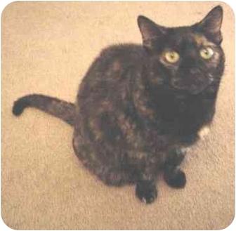 Domestic Shorthair Cat for adoption in Haughton, Louisiana - Samantha Stricklin