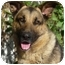 Photo 1 - German Shepherd Dog Mix Dog for adoption in Los Angeles, California - Rocky von Russell