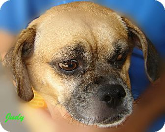 Pug Mix Dog for adoption in Beaumont, Texas - Judy