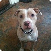 Adopt A Pet :: Gracie - Roaring Spring, PA