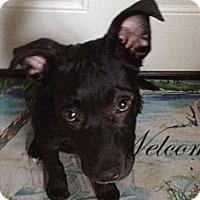 Adopt A Pet :: Snoopy - Oceanside, CA