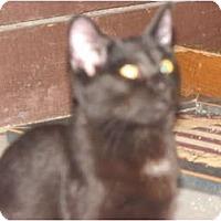 Adopt A Pet :: Lolita - Richfield, OH