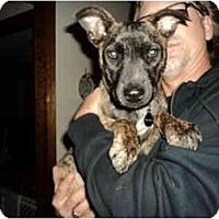 Adopt A Pet :: Brandy - Fresno, CA