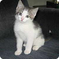 Adopt A Pet :: Piper - Kirkwood, DE