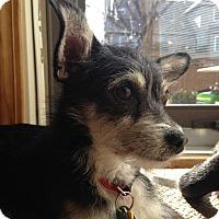 Adopt A Pet :: Tina - Shawnee Mission, KS