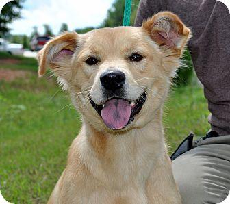 Labrador Retriever Mix Dog for adoption in Aiken, South Carolina - Nadia
