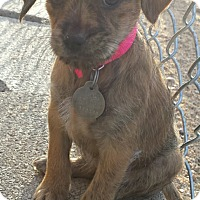 Adopt A Pet :: Michelle - Scottsdale, AZ