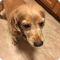 Adopt A Pet :: Lilly 8yr Adopted - Mentor, OH