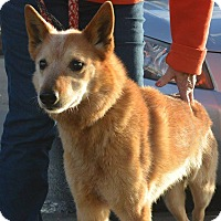 Adopt A Pet :: Whiskey - Meridian, ID
