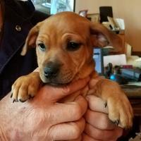 Adopt A Pet :: CRITTER - Kiln, MS