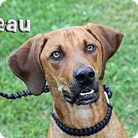 Adopt A Pet :: Beau - Joliet, IL