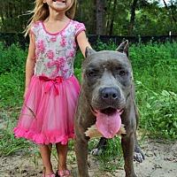 Adopt A Pet :: Hades - Tampa, FL