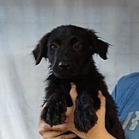 Adopt A Pet :: Odin - Oviedo, FL