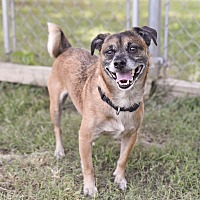Adopt A Pet :: Bullet - Chattanooga, TN