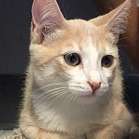 Adopt A Pet :: Kaleb - Yukon, OK