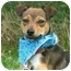 Photo 1 - Terrier (Unknown Type, Small) Mix Dog for adoption in Portsmouth, Rhode Island - Smiley
