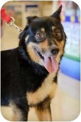 Cattle Dog Mix Dog for adoption in Williamsburg, Virginia - Jazz
